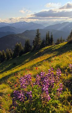 Wildflowers at Sunset, Atop Lakeview Ridge, Pacific Crest Trail, Pasayten Wilderness by i8seattle, via Flickr