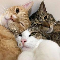 jesť Teen mačička video masívne striekať porno videá