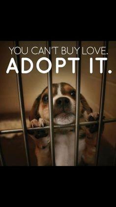Please adopt, don't shop A community service