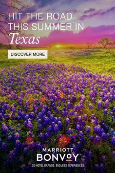 Texas Vacations, Texas Roadtrip, Texas Travel, Guard Your Heart Quotes, Vacation Savings, Only In Texas, Hotel Specials, Hotel Packages, Hotel Branding