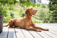 Ferienhaus mit Hund: PURESLeben in der Südsteiermark | Tierischer-Urlaub.com