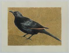 SA_Blackbird-16sfweb To Trace, Blackbird, Graceland, Ethereal, Artist, Animals, Animales, Animaux, Artists