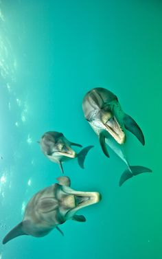 Laughing dolphins by Atmo Kubesa