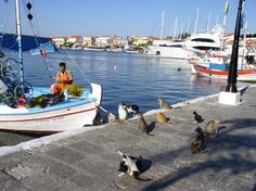Cats on the quay at Pythagorion, Samos, Greece Photo Samos Greece, All About Cats, Cute Animal Pictures, Nature Animals, Cats And Kittens, Cute Animals, Creatures, Boat, Funny