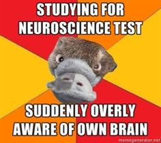 """[Picture: Background: 6 piece pie style colour split with red, orange, and yellow alternating. Foreground: a head-on photo of a platypus's face. Top text: """"Studying for neuroscience test"""" Bottom text: """"Suddenly overly aware of own brain""""]"""
