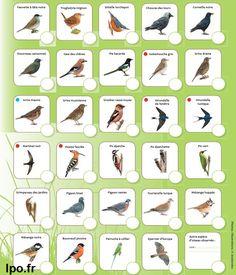 oiseaux villes et jardin LPO