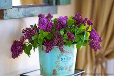 Lilacs in a bucket