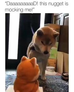 Funny Videos For Kids, Funny Animal Memes, Funny Animal Videos, Dog Memes, Cute Funny Animals, Funny Animal Pictures, Videos Funny, Funny Kids, Best Funny Pictures