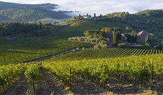 Tuscany, Italy, vineyards, cuisine, wine, landscape