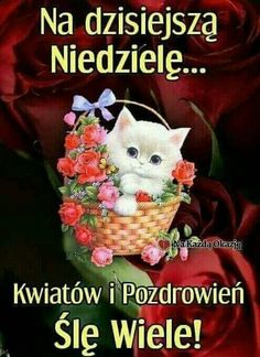 Niech Nowy Tydzień Przyniesie Ci same. Weekend Humor, Grinch, Cats And Kittens, Good Morning, Pictures, Aga, Simply Beautiful, Plants, Good Morning Wishes