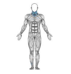 Como treinar o músculo principal do pescoço