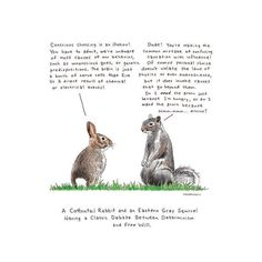 Cottontail Rabbit Gray Squirrel Philosophy by DrawnFromMyBrain
