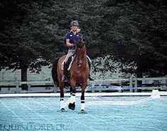 (8) horse gif   Tumblr    equestrian equine cheval pferde caballo   bay dressage half pass