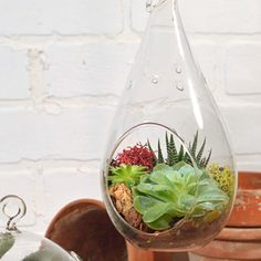 Includes 3 Assorted Succulents and is Ready to Display Right Away.