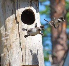 Aves en primer despegue - FIO Extremadura