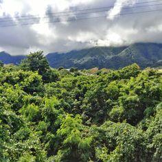 St Kitts lush green interior