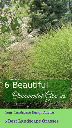 What are the best, low maintenance gorgeous grasses? Here are some of my favorites.  http://www.landscape-design-advice.com/ornamental-grass.html  I love them for their textures and beautiful plumes late summer and early fall. They even look great in the winter, blowing in the wind. Maiden Grass, Fountain Grass and Mexican Feather Grass are fabulous.