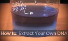How to: Extract Your Own DNA -- PBS's NOVA demonstrates how you can spit in a cup, then isolate your DNA with table salt, dish soap, water, food coloring, and isopropal (rubbing) alcohol. Eventually, it'll form in the solution as strands and clumps