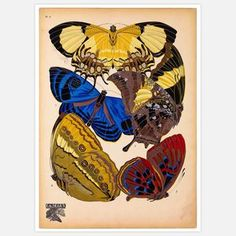 Butterflies:::   Plate 4 16x20 now featured on Fab.