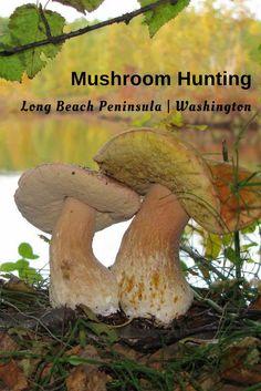 Mushroom hunting on
