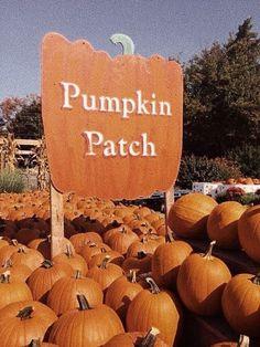 Autumn and Halloween Aesthetic Active All Year Long Café Design, The Farm, Hallowen Ideas, Illustrator, Autumn Aesthetic, Orange Aesthetic, Autumn Cozy, Happy Fall Y'all, Fall Baby
