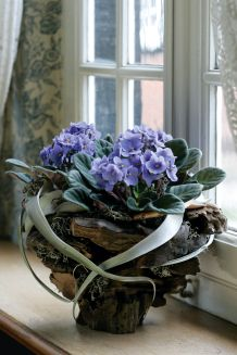 Landlust - Veilchen fürs Fenster