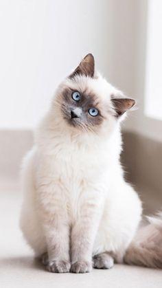 Cat > Interesting.. ►get more @rohitanshu◄