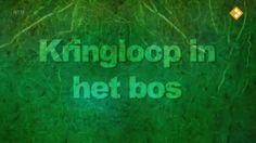 Schooltv: Nieuws uit de natuur - Kringloop in het bos
