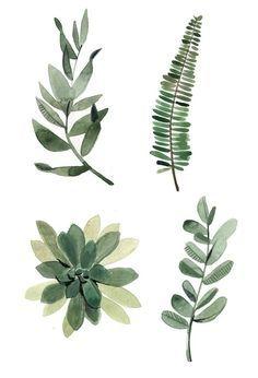 pretty watercolor plants
