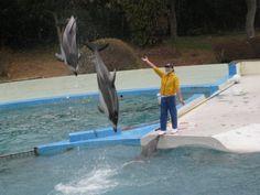 イルカのショーはイルカの習性、特性を組み合わせて行われています。  このようなジャンプも、イルカにできることを、トレーナーが協力してもらって行なっているのです。  トレーナーが新米だとイルカは言うことを聞かないどころか、イルカにからかわれることもあるそうです。