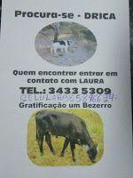 """""""O Grito do Bicho"""": Bezerro por Poodle: família mineira oferece recomp..."""