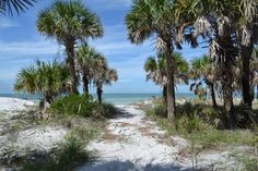 Exploring Caladesi Island, Florida  I think I might spend the summer here.