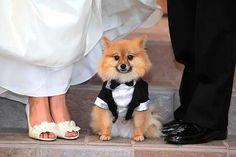 Wedding Pom!!