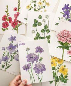 새로운 책 준비중이에요 그림포스팅이 뜸했던 이유😊 #이랑그림 Watercolor Paintings For Beginners, Watercolour Tutorials, Watercolour Painting, Watercolor Flowers, Painting & Drawing, Painting Flowers, Botanical Illustration, Botanical Prints, Nature Sketch