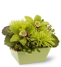 Small cube of green Cymbidiums & Fuji Mums... I would love to get some of these