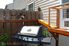 What do you get when you combine a catwalk with a catio? You get this. The folks at Cuckoo 4 Design built a catio-like enclosure outside one of their windows, and then connected it to a walkway that runs along the fence so their kitties can enjoy the out of doors.