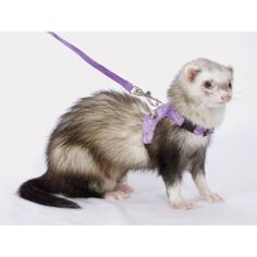 Marshall Ferret Walking Jacket allows ferrets to explore the environment.    Quick-snap buckles and adjustable harness for quick on and off.