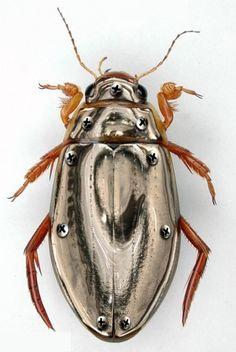 .*Metallic beetle bug.*