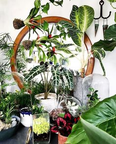 Plant explosion at the one and only @labofem in Istanbul! This amazing plant shop & the owner's green home are featured in our #urbanjunglebook - get your copy now!