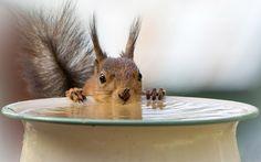 Wiewiórka, Woda