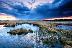 Project Maya - peatlands at sunset