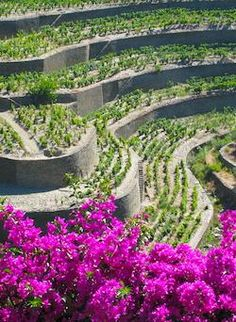 Terraced vineyards (#Portwine) at Boa Vista, Douro Valley in Portugal. #PortugalFlowerPower
