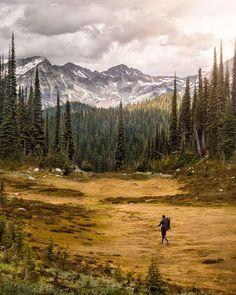 En parcourant le parc national du Mont-Revelstoke, on a l'impression de se promener dans une peinture. Situé dans les montagnes Selkirk en Colombie-Britannique, il est réputé pour la diversité de ses paysages : forêt pluviale, prairies alpines luxuriantes, crêtes abruptes et glaciers. : @niklas.christl : @HelloBC #ExploreBC