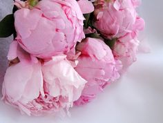 si-renas:    d-a-i-s-i-e—s:    pink peonies = :)