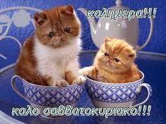 Αποτέλεσμα εικόνας για Καλημέρα !!καλο σαββατοκύριακο