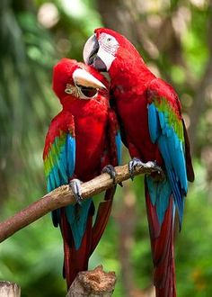 Macao, Colorful Parrots, Colorful Birds, Tropical Animals, Bird Wallpaper, Animal Wallpaper, Most Beautiful Birds, Animals Beautiful, Ara Bleu