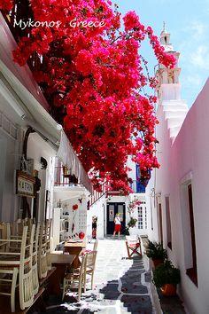 cute narrow street, full of red flowers in #Mykonos