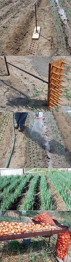 Hacer este utensilio para plantar cebollas, ajos...