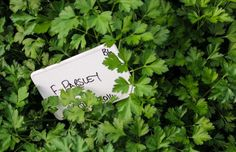 Thyme to explore Allée Bleue's herb tour – a sensory delight!