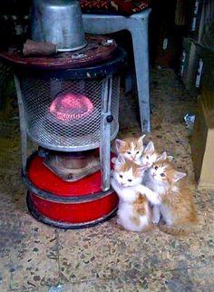 29 chats qui se sont trouvés de parfaits endroits pour se réchauffer !